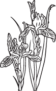 Clipart Image For Headstone Monument flower 33