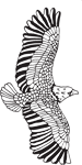 Clipart Image For Headstone Monument Eagle 06